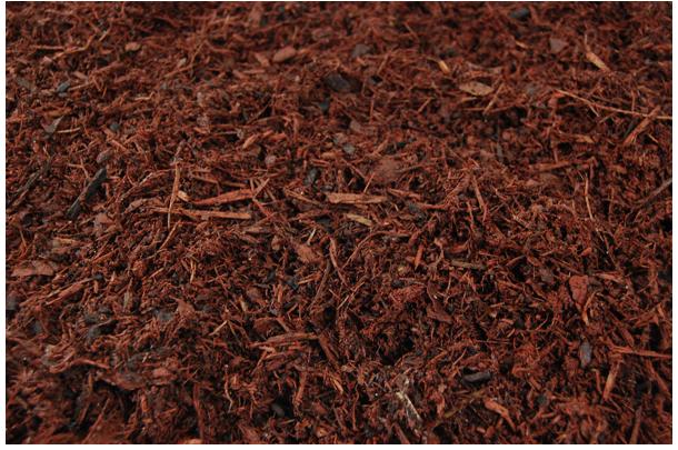 Enhance red pine